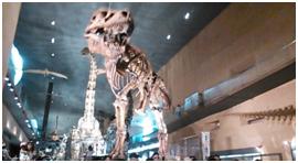 恐竜骨格標本